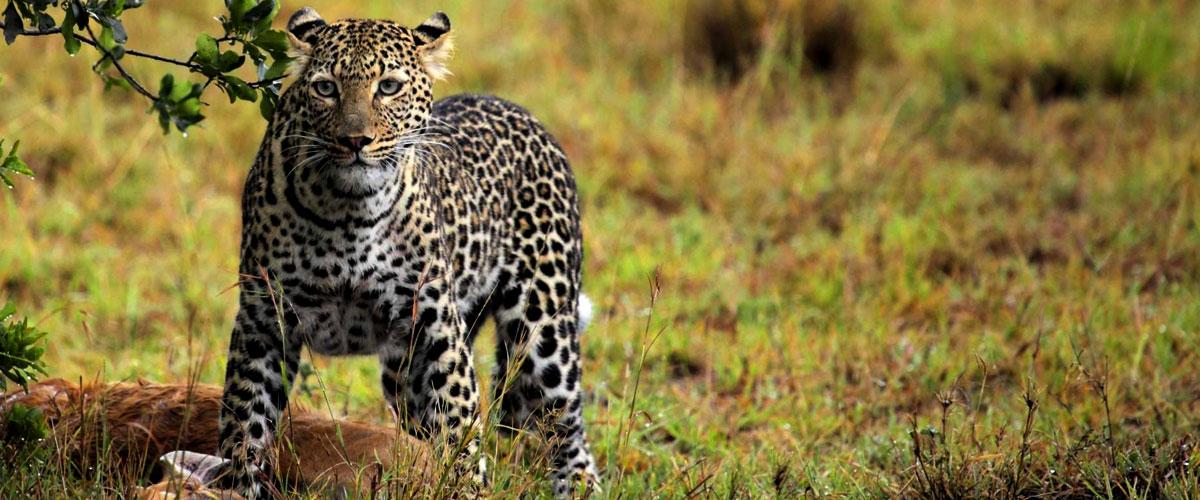 big-five-safaris